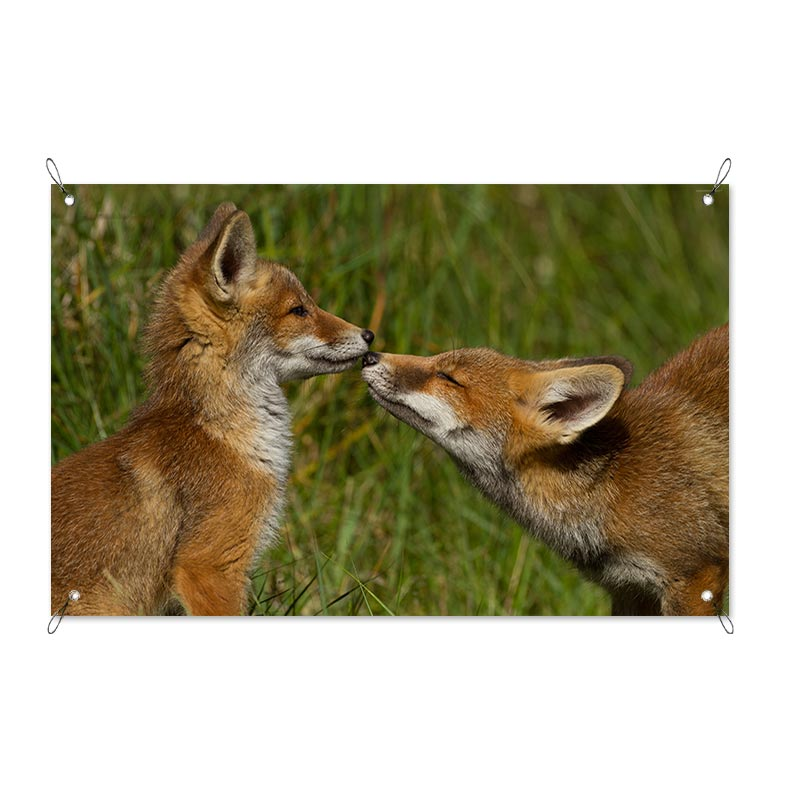 Garden poster Playing fox