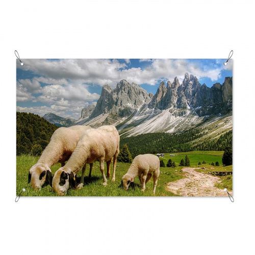 Poster da giardino Pecore in montagna