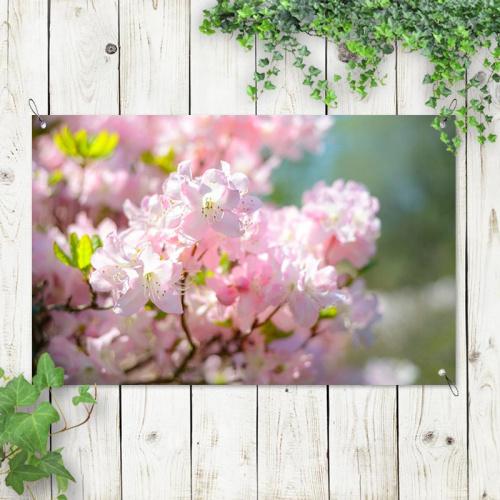 Poster da giardino Fiori di prunus