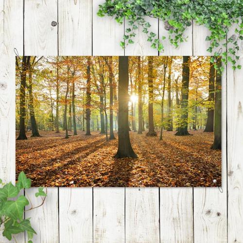 Poster da giardino Foresta in colori autunnali