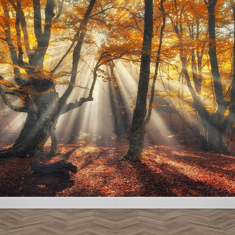 Carta da parati Sole nella foresta d'autunno
