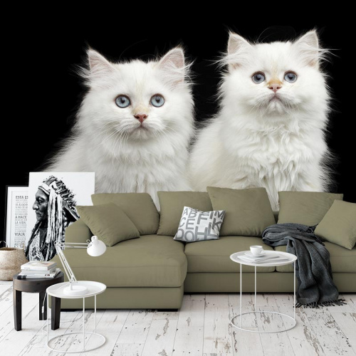 Carta da parati Due gattini bianchi
