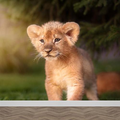 Fotobehang leeuwtje in het gras