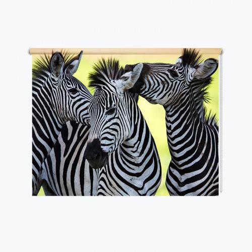Tenda a rullo Tre zebre avvolgenti