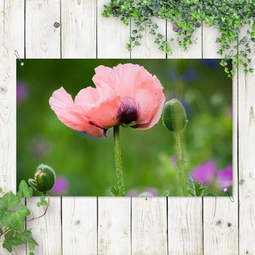 Poster da giardino Fiore rosa selvatico