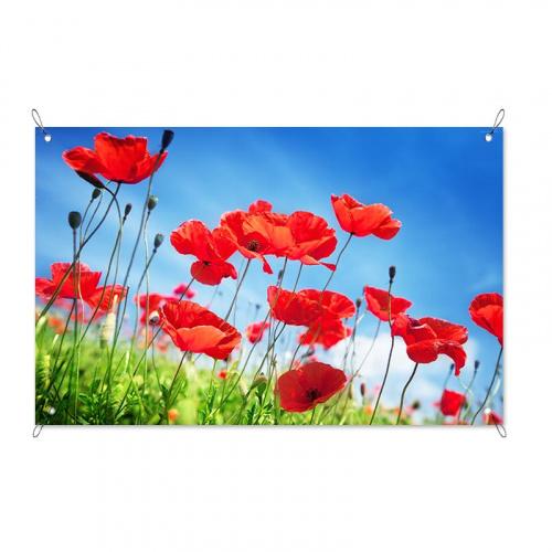 Poster da giardino Campo di papaveri
