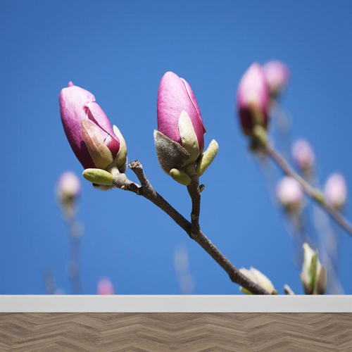 Fotobehang magnolia in knop