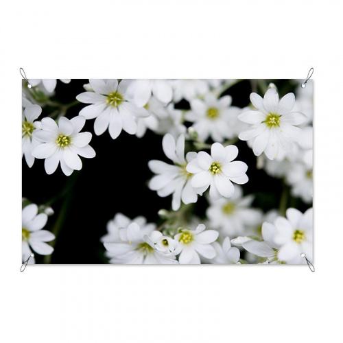 Poster da giardino Fiori bianchi