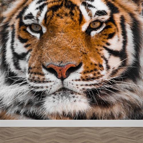 Carta da parati Tigre vicino