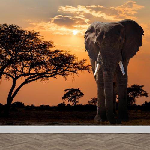 Carta da parati Elefante nel tramonto