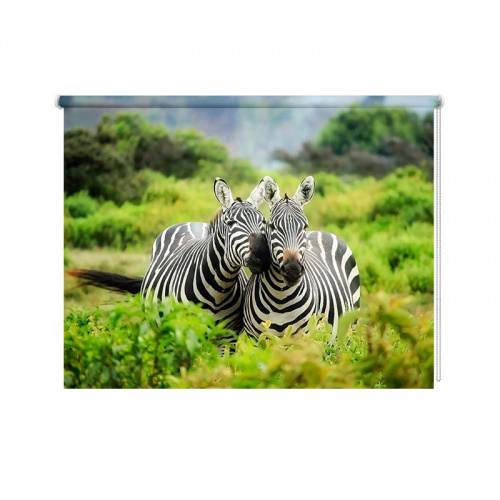 Tenda a rullo Zebre coccole