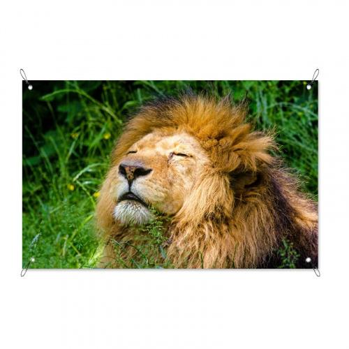 Poster da giardino Leone rilassato