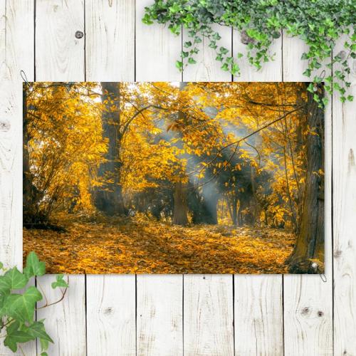 Poster da giardino Raggi di sole nella foresta