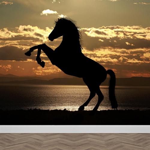 Carta da parati Cavallo nel sole della sera