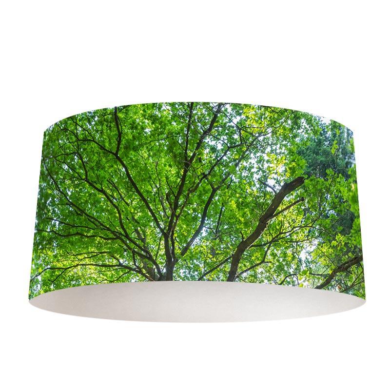 Lampenkap boom met groene bladeren