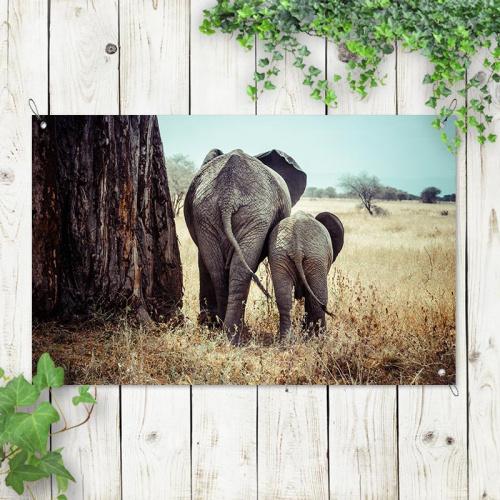 Tuinposter Olifant met jong