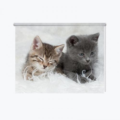 Tenda a rullo 2 simpatici gattini