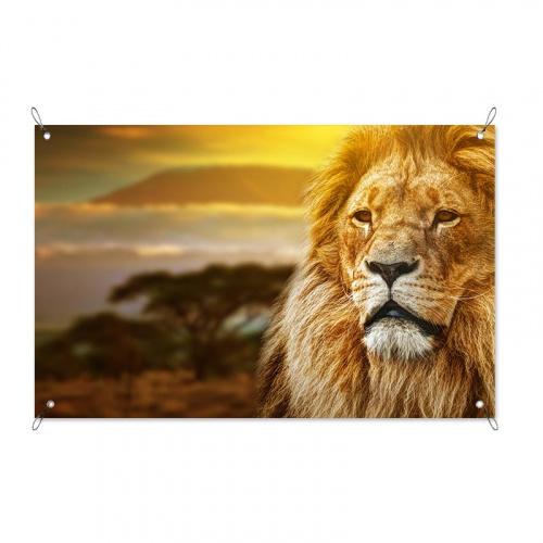 Poster da giardino Leone al tramonto