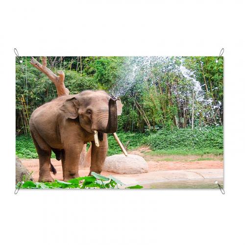 Poster da giardino Elefante nella doccia