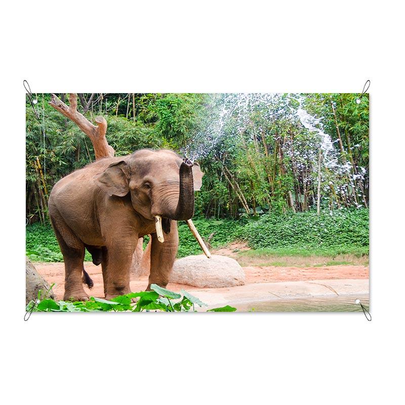Poster da giardino Elefante
