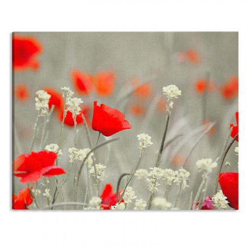 Tela Campo di papaveri in rosso grigio bianco