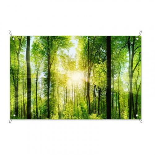 Poster da giardino Sole nella foresta