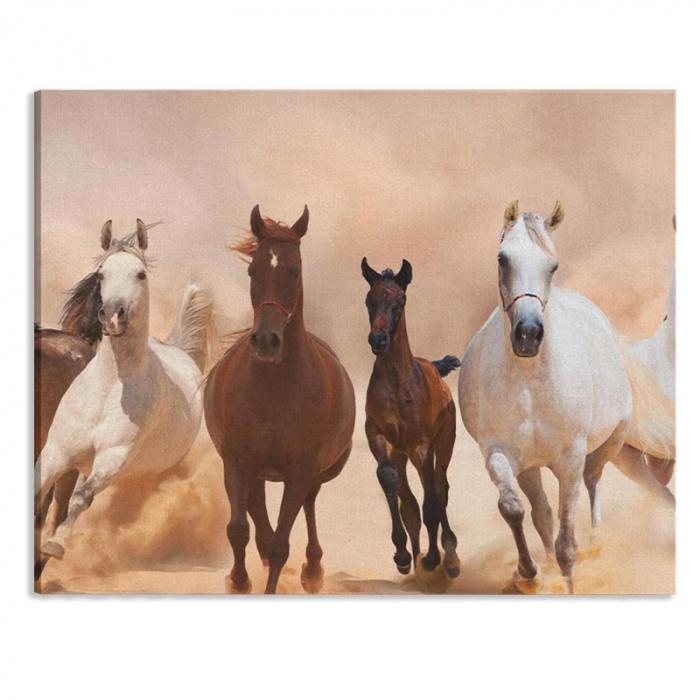 Tela Gruppo di cavalli al galoppo