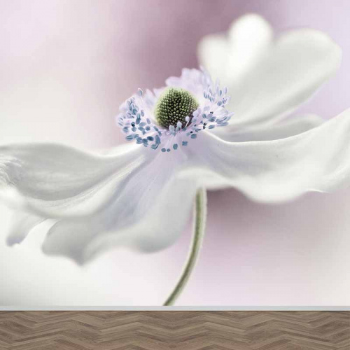 Carta da parati Speciale Fiore